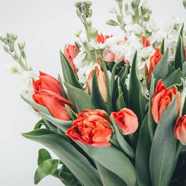 Sveikinimas kovo 8 – osios proga